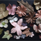 Paper Flowers - Brown & Copper Tones - Assorted Sizes, Shades & Sizes - 24 Pack