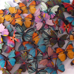 50 x 27mm Butterfly wood button~Flat back.