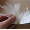 Ivory hackle feathers great for millinery projects 40+ feathers on strip