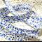 Beautiful vintage retro style bias (blue, purple & grey floral), 6 mtrs ♥
