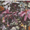 Patchwork - Quilting Fabric - Fat 1/4 - Iris Flowers - Maroon, Brown, Pink, Grey
