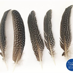 BULK BUY - Spotted Guinea Fowl Feathers -100 Pack
