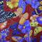 Fabric - Cotton - Butterflies