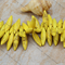 24 Yellow tone Howlite stone top drilled spike beads 30x8mm