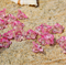 50 Pink clear transparent acrylic flower bead caps 7x12mm
