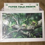 Paper Tole Prints - frogs