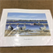 Paper Tole Prints - Seaside Pelican Scene called Morning Reflections