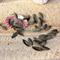 30 Textured Leaf Charm pendant beads 21mmx7mm bronze tone