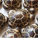 Tortoise Brown Turtle Beads Czech Glass (8 pieces)