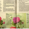 An Old Fashioned Garden, Peggy Nuttall, Decorative Painting, Craft Destash